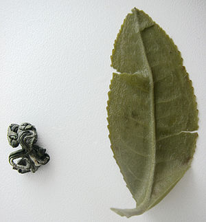 300px Green tea leaf boiled and dryed Benefits of Chinese Green Tea Diet